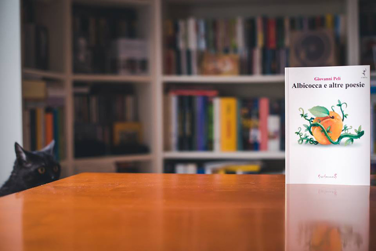 albicocca-foto02