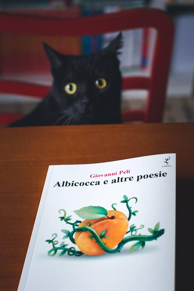 albicocca-foto03